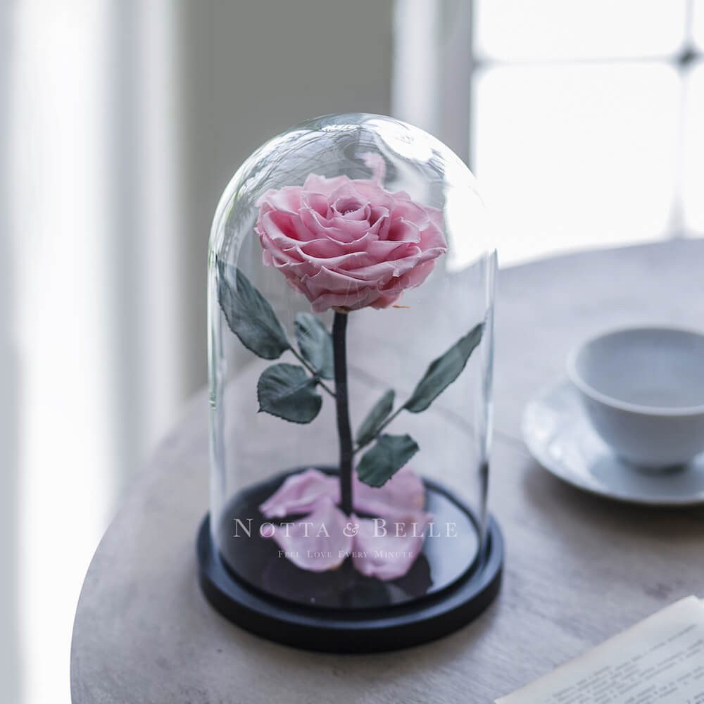 light pink rose in jar