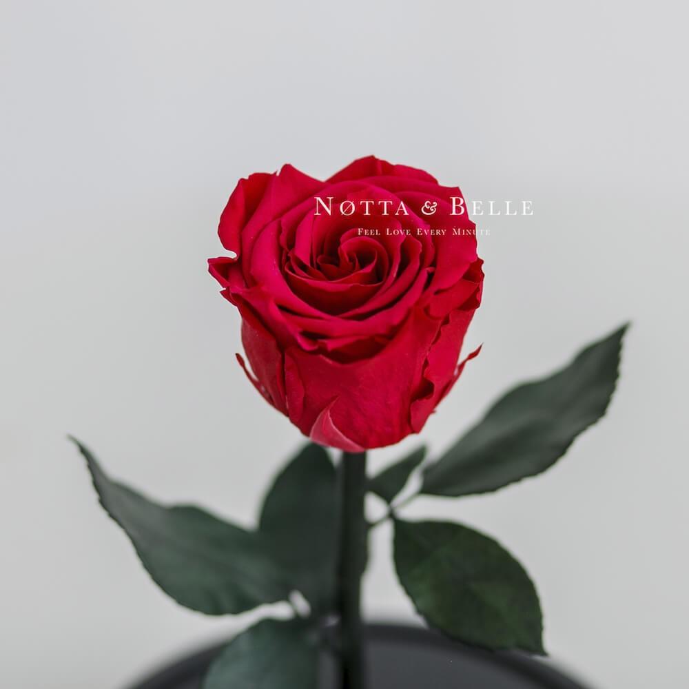 Малиновая роза в колбе Mini