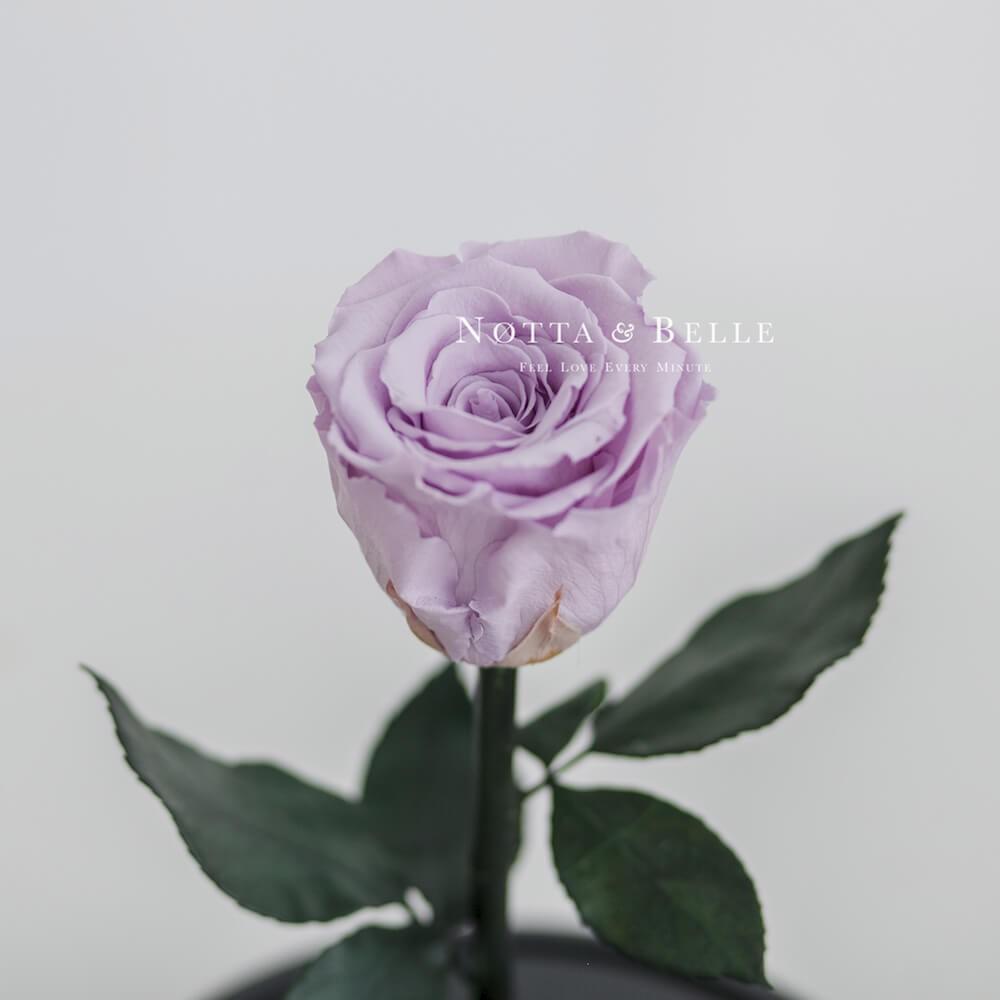 Бутон лавандовой розы в колбе - Mini