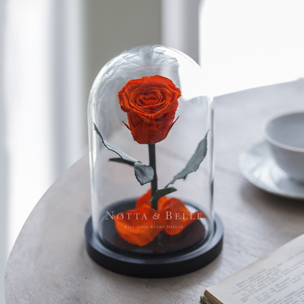 orange rose in glass dome - mini