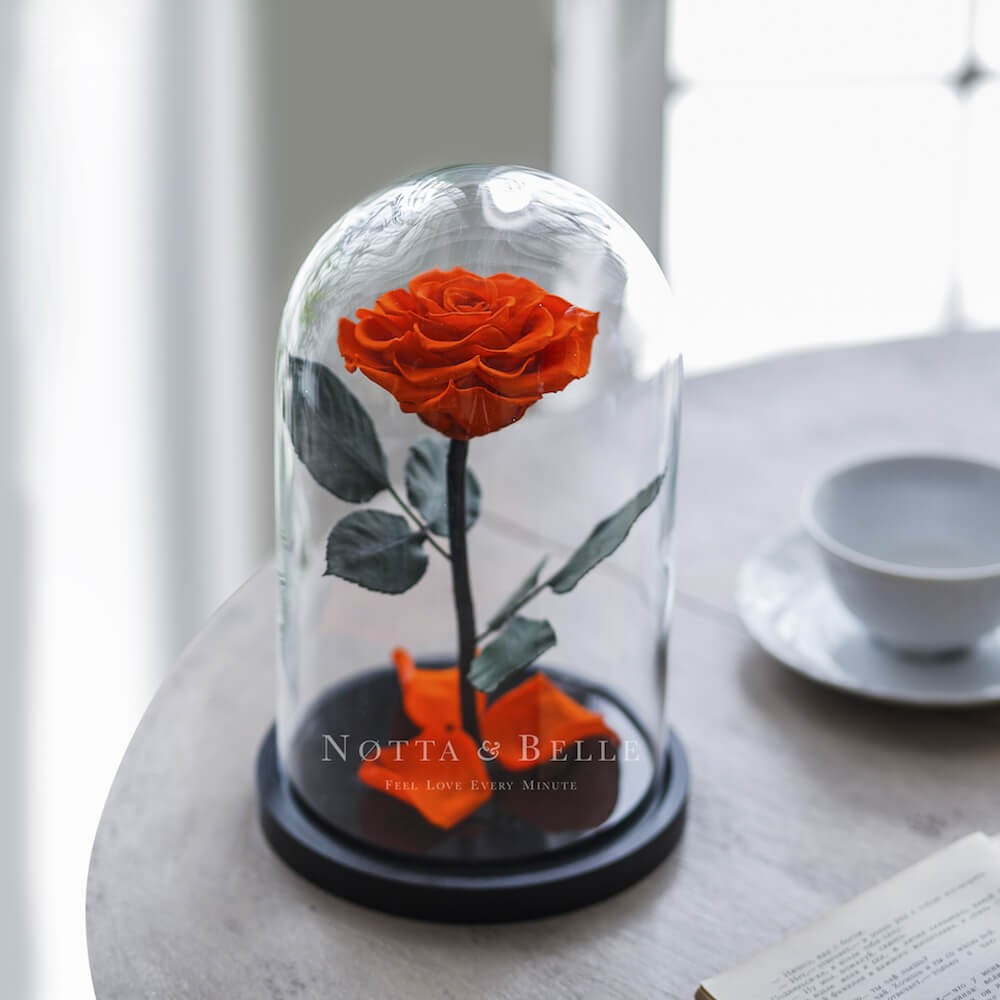 orange rose in jar