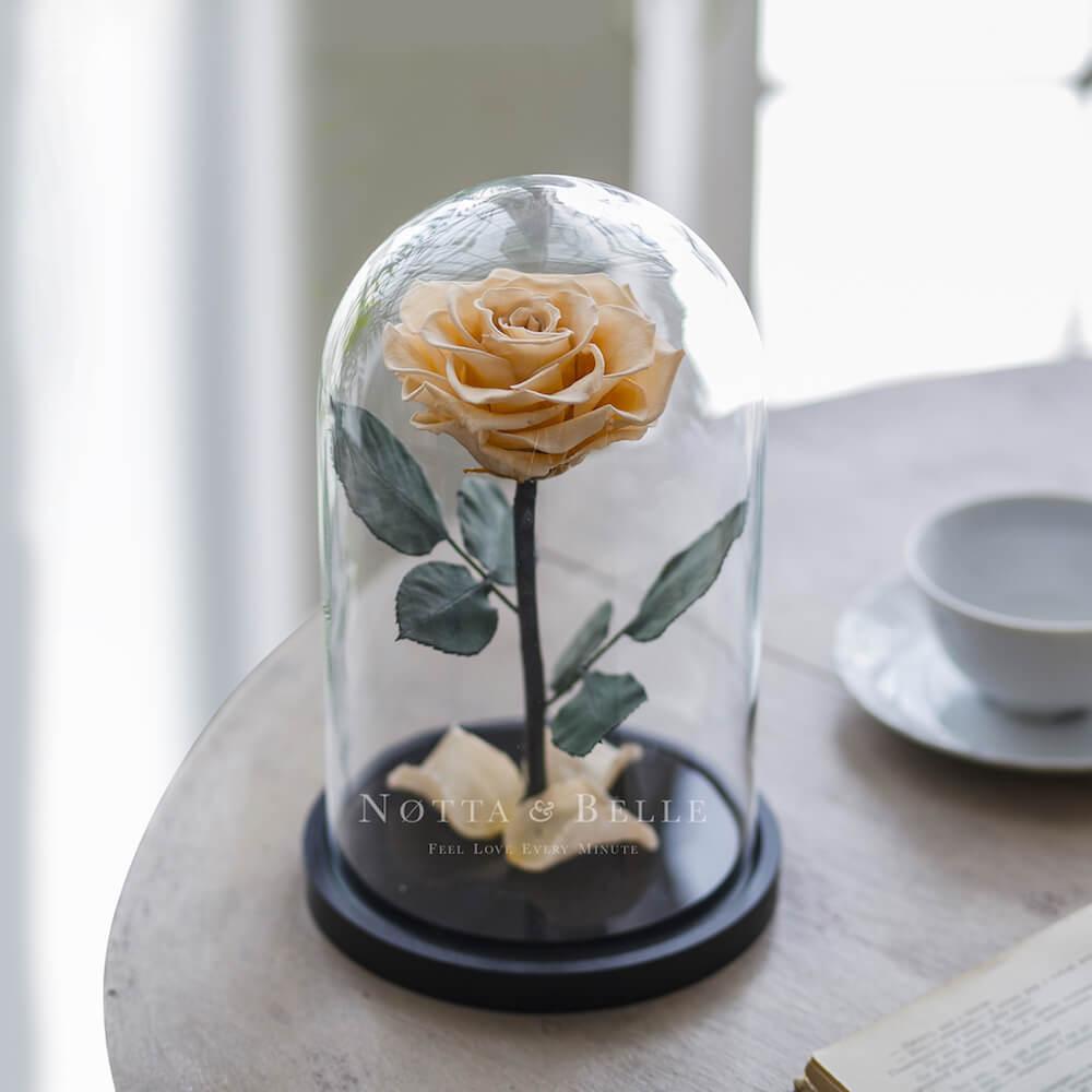 Шампань роза в колбе - Premium