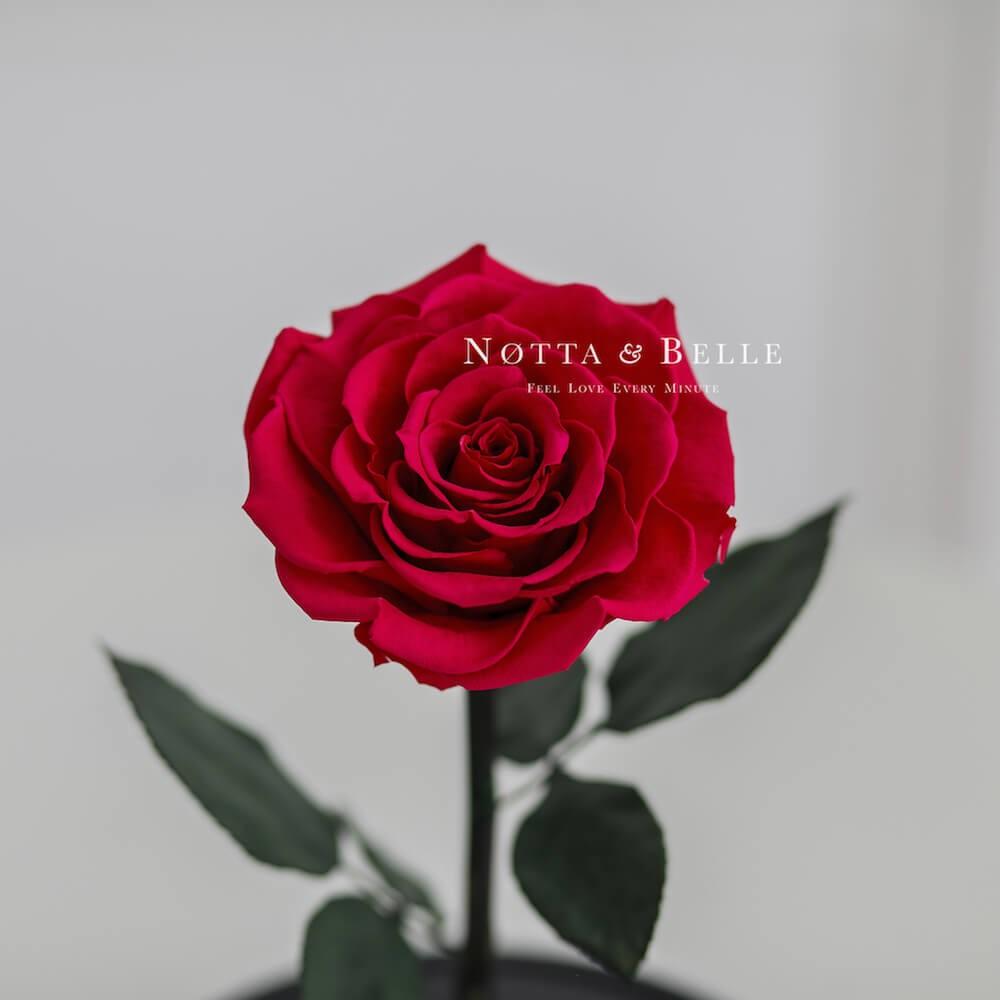 Малиновая роза в колбе Premium