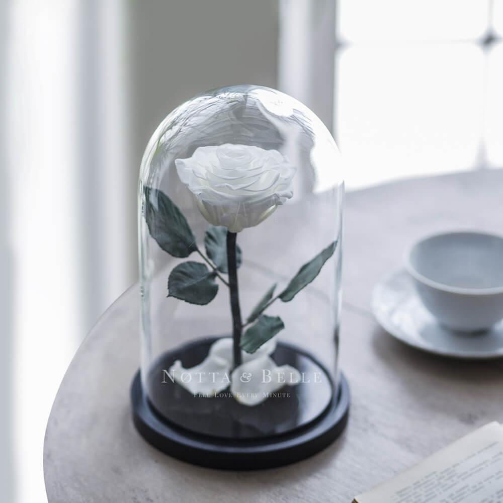Белая роза в колбе Premium