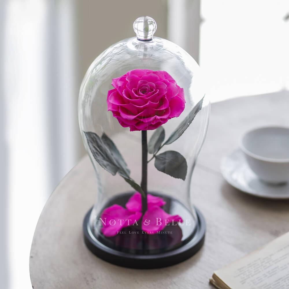 Ярко розовая роза в фигурной колбе - Premium X