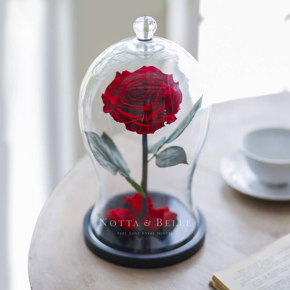 Бордовая роза в фигурной колбе - Premium X