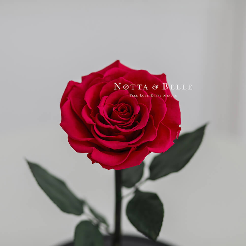 Бутон розы цвета фуксии в фигурной колбе - Premium X