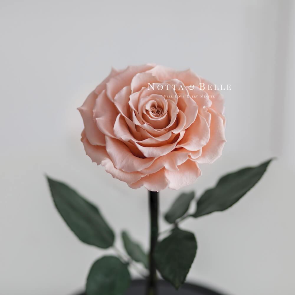 Бутон персиковой розы в фигурной колбе - Premium X