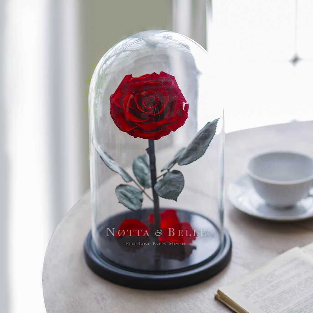 red rose in glass dome - king