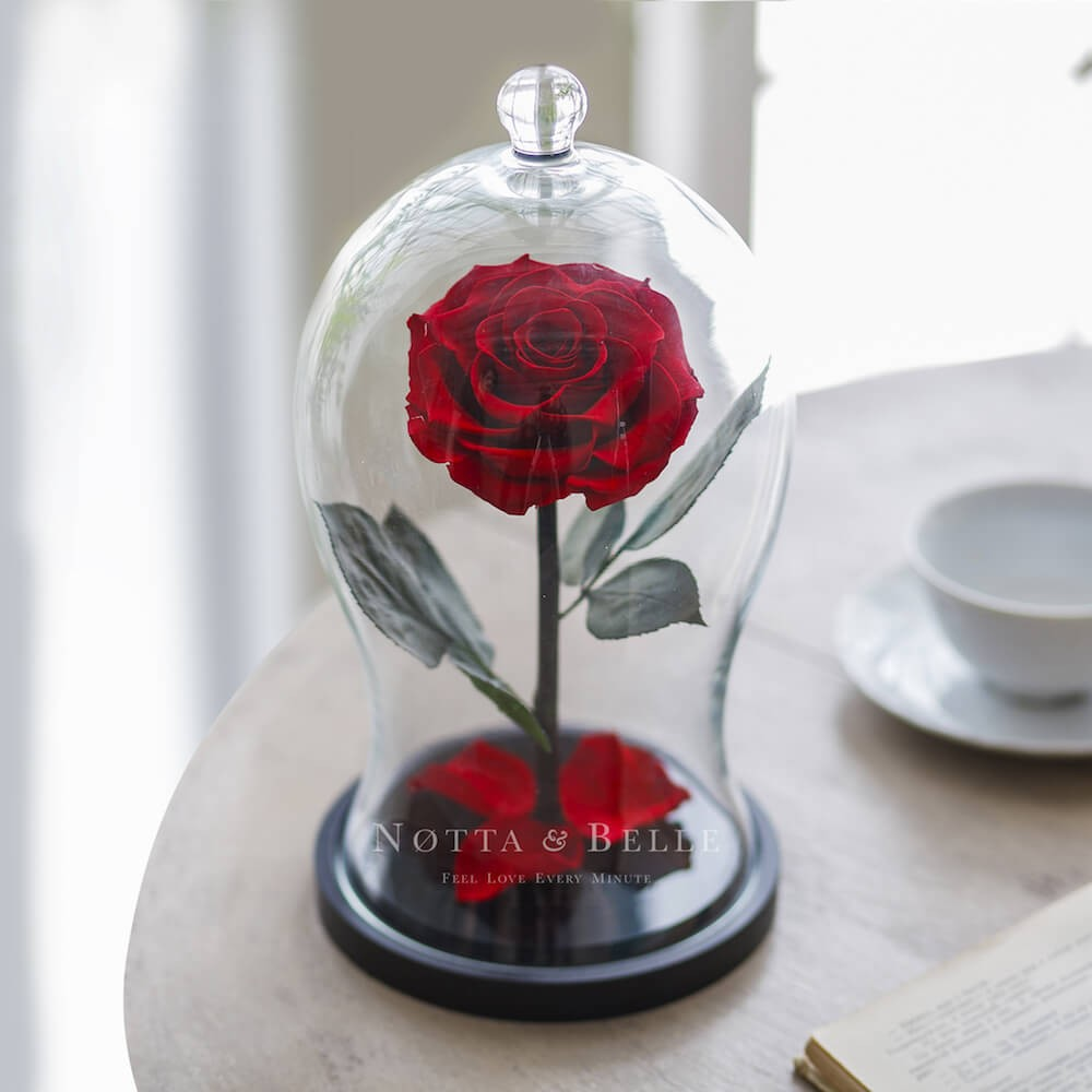 red rose in glass dome - premium x