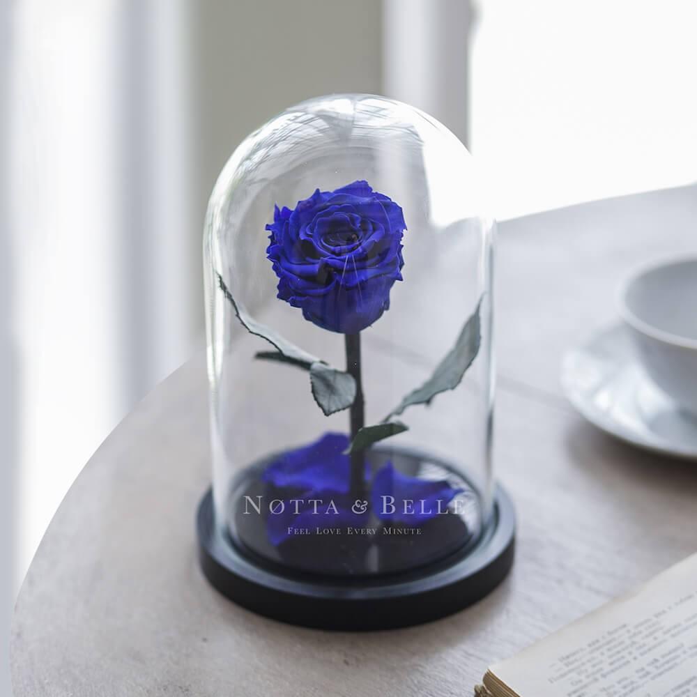 acheter une rose ternelle bleu fonc mini sous cloche. Black Bedroom Furniture Sets. Home Design Ideas