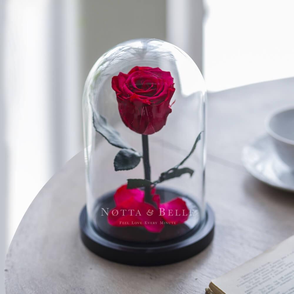 Acheter Une Rose Eternelle Couleur Fuchsia Mini Sous Cloche Notta