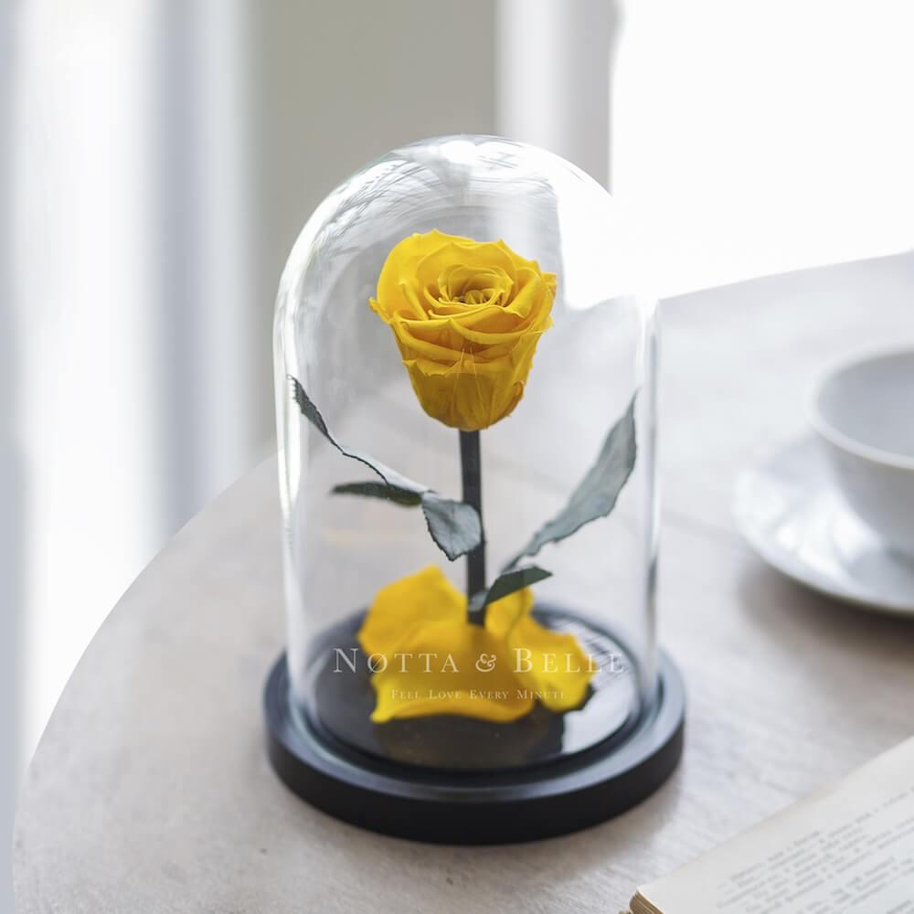 Acheter Une Rose Eternelle Jaune Mini Sous Cloche Notta Belle