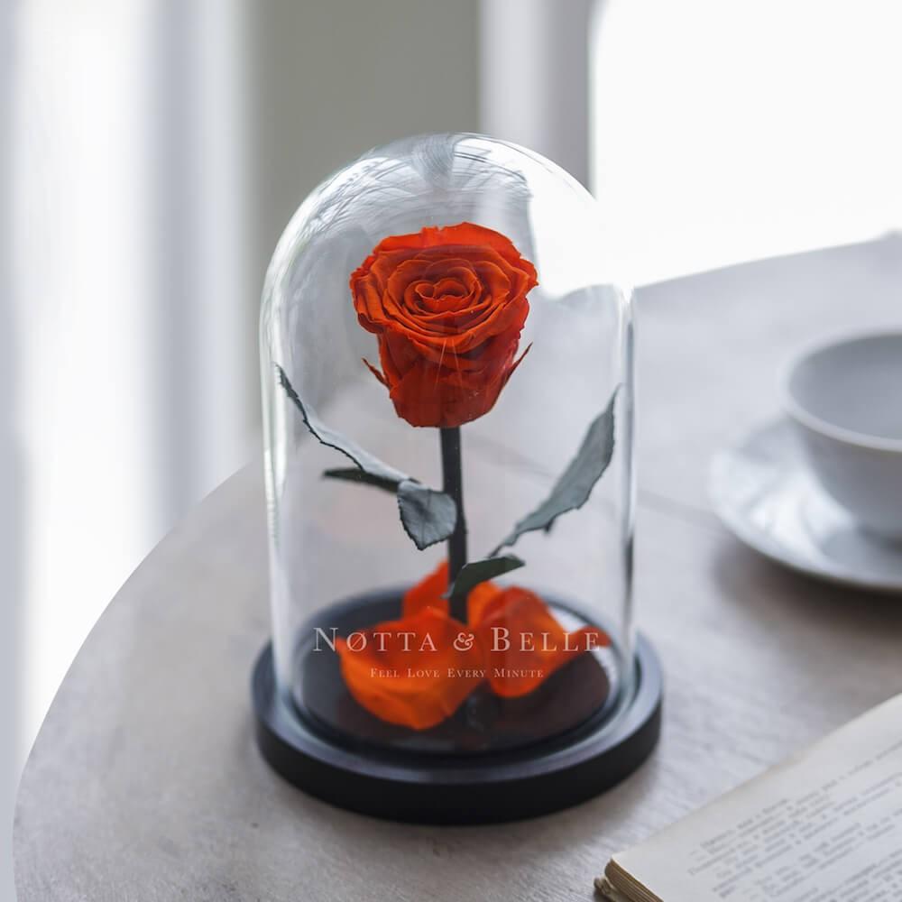 Rose Mini Orange
