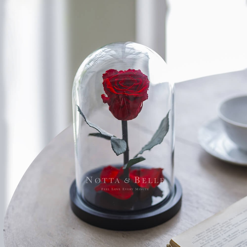acheter une rose ternelle rouge mini sous cloche notta. Black Bedroom Furniture Sets. Home Design Ideas