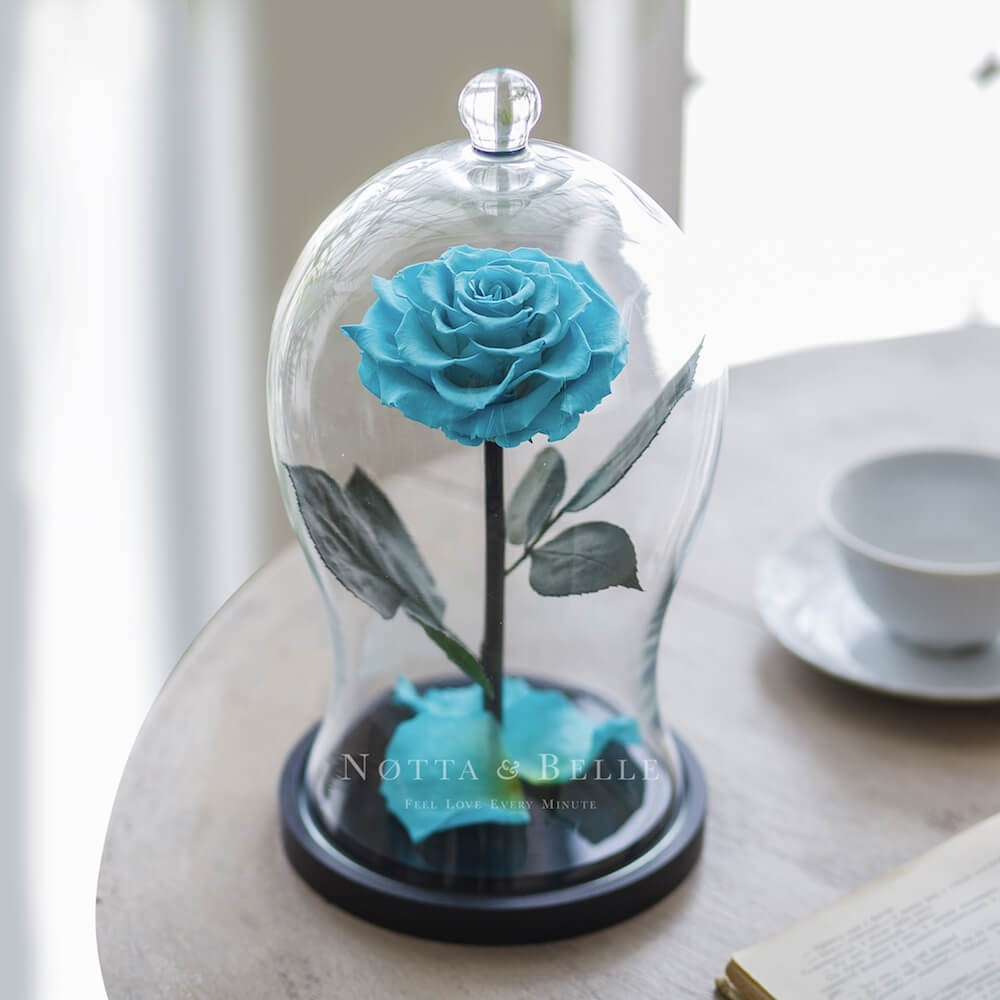 turquoise rose in glass dome - premium x