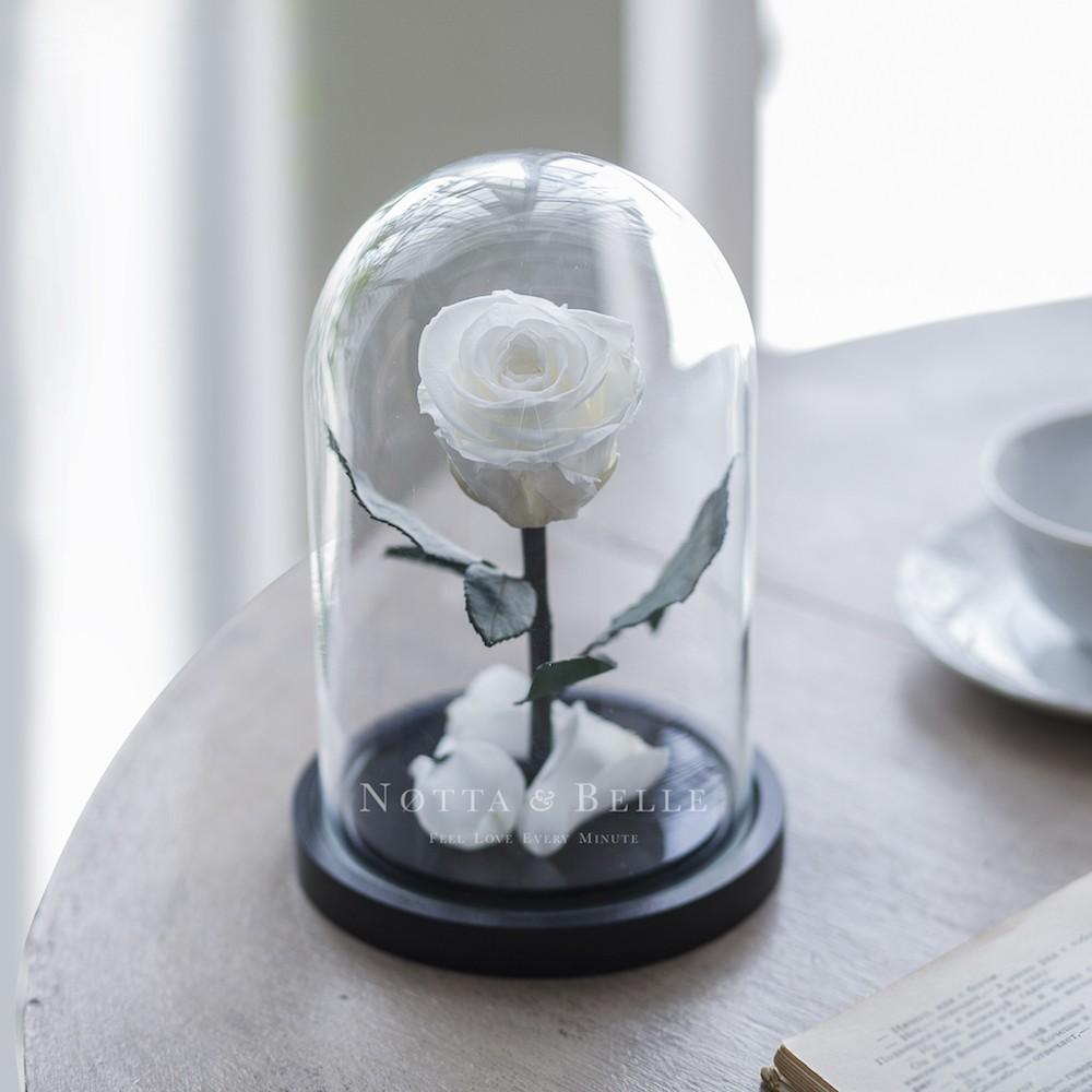 white rose in glass dome - mini
