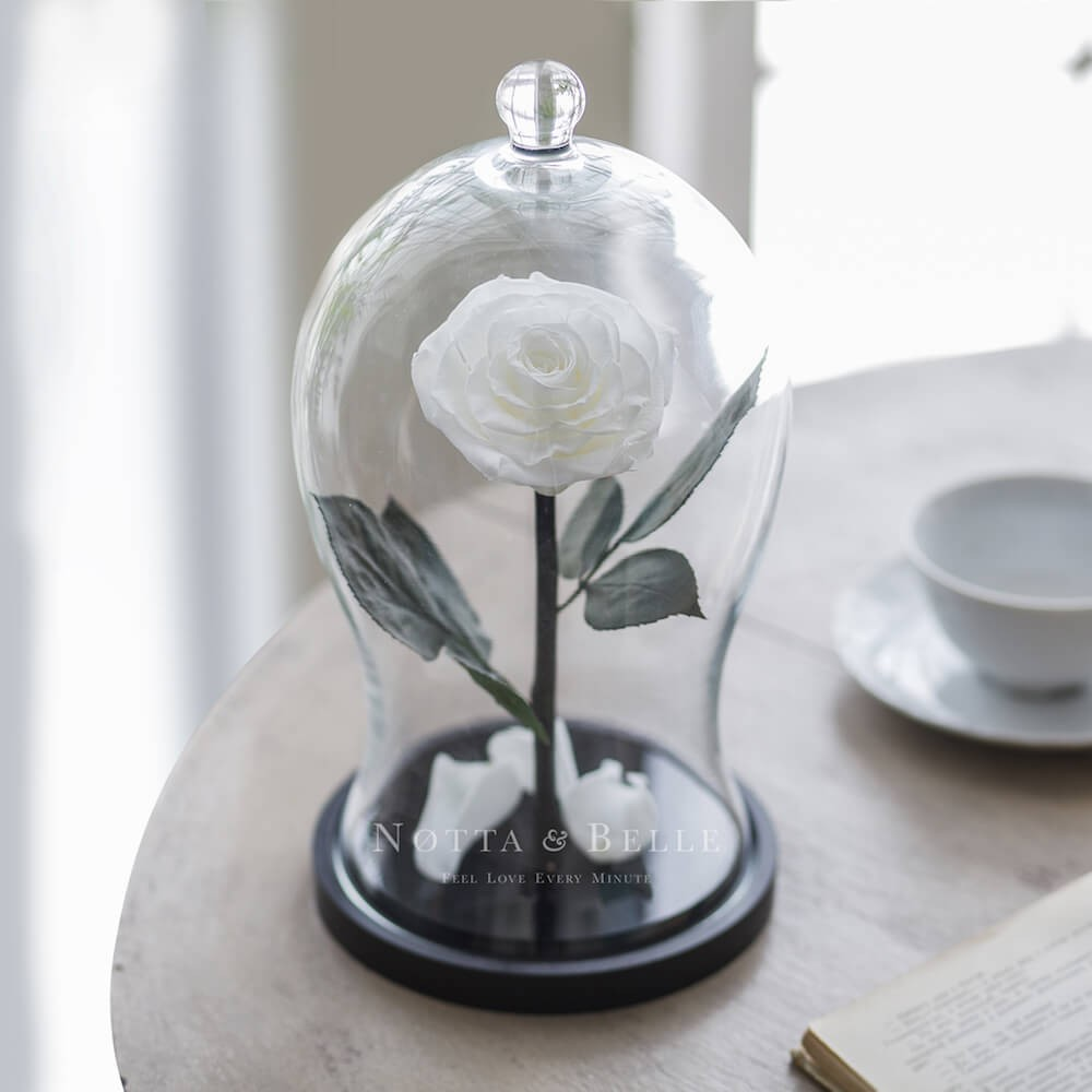 white rose in glass dome - premium x