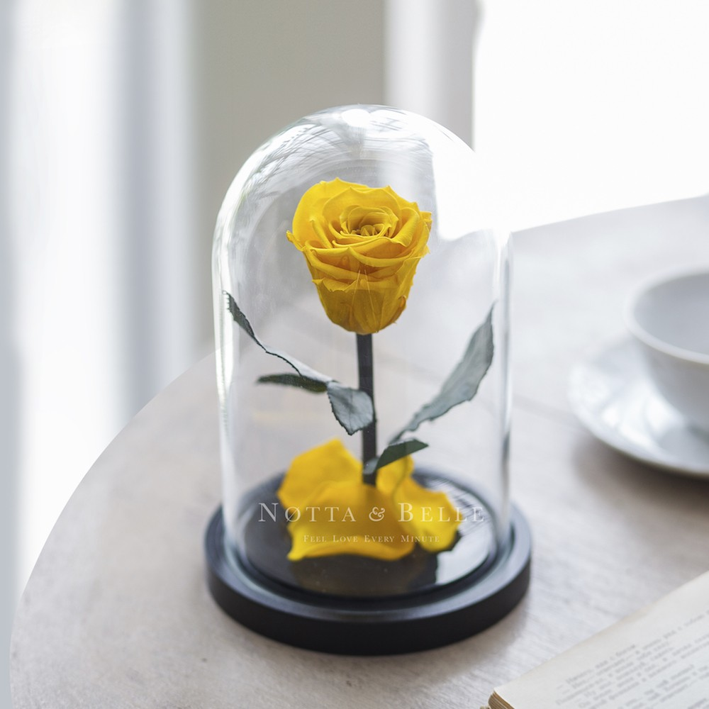 yellow rose in glass dome - mini