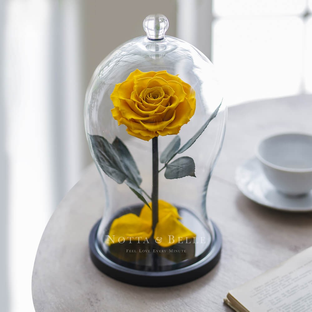 yellow rose in glass dome - premium x