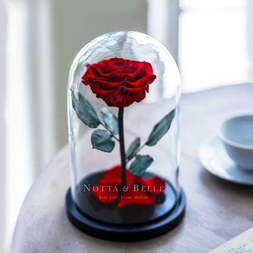 forever red rose in glass dome - premium