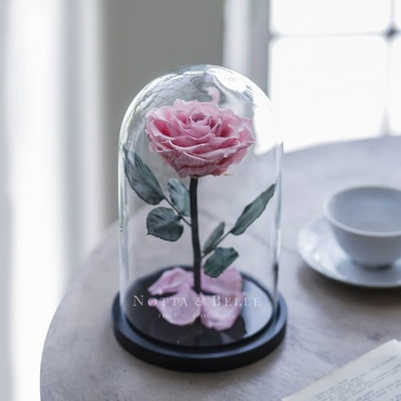 forever light pink rose in glass dome - premium