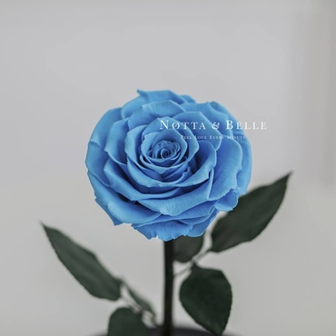 forever light blue rose - premium