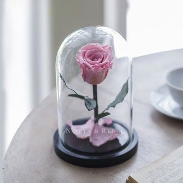 forever light pink rose in glass dome - mini