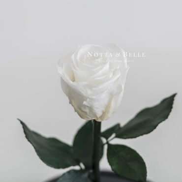 forever white rose - mini