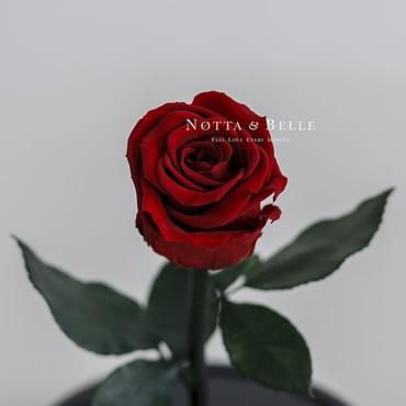 Бутон красной розы в колбе - Mini