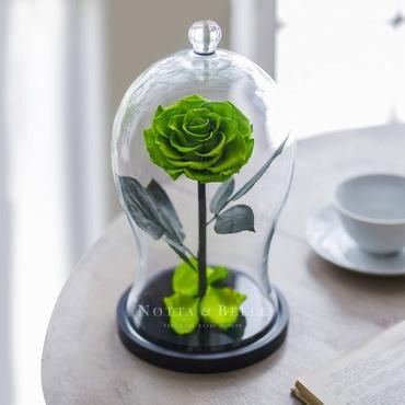 Салатовая роза в фигурной колбе - Premium X