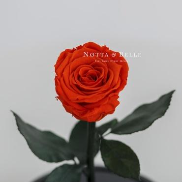 Бутон оранжевой розы в колбе - Mini