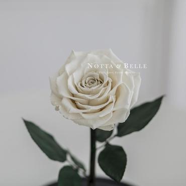 Бутон белой розы в колбе - King