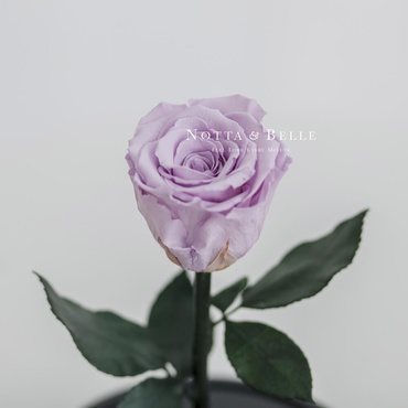 forever lavender rose - mini