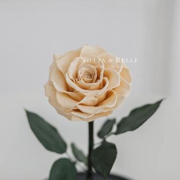 Бутон розы цвета шампань в фигурной колбе - Premium X