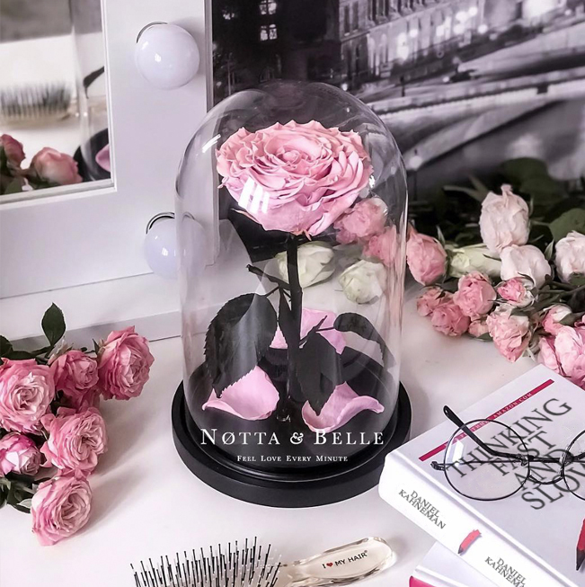 Preserved rose beauty and the beast rose belle rose san valentino