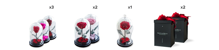 rose in a glass dome
